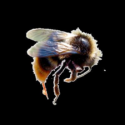 Пчелиный яд лечебные свойства и применение