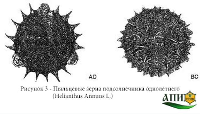 Рисунок 3 - Пыльцевые зерна подсолнечника однолетнего (Helianthus Annuus L.) Меды монофлорные. Технические условия. ГОСТ 31766-2012