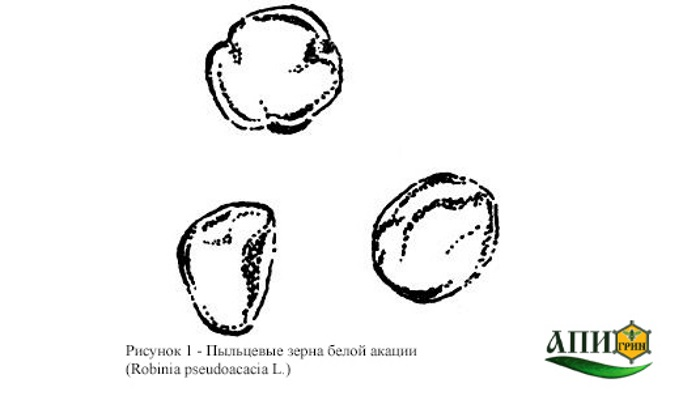 Рисунок 1 - Пыльцевые зерна белой акации. Мед натуральный. Технические условия. ГОСТ 19792-2001.