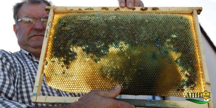 Разноцветный цветочный мед фото 1