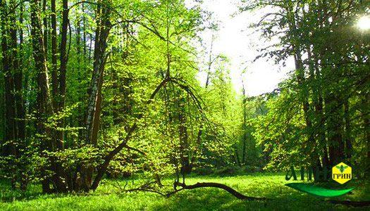 Лесной мед места сбора