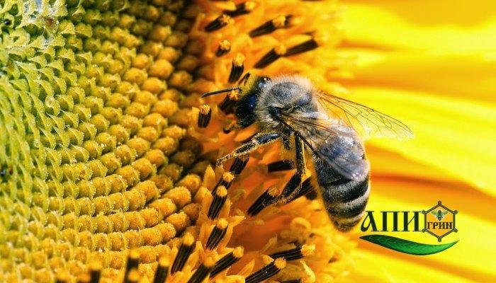 пчелиный яд свойства