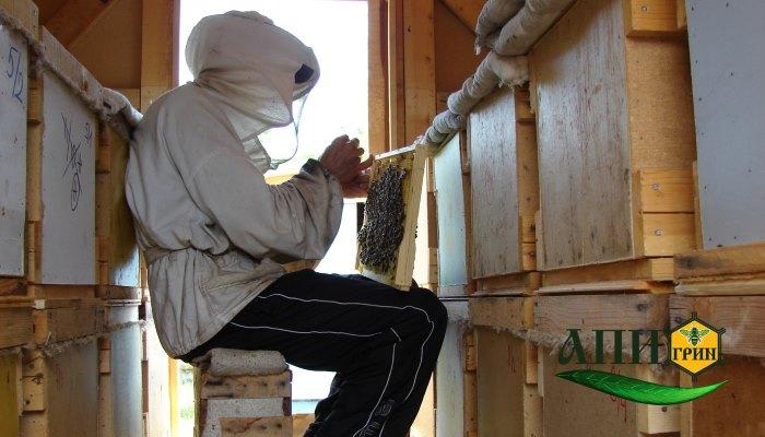 Работа с отводками в павильоне для содержания пчел 5 модели