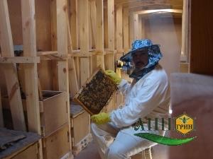 Работа в павильонах - очередной технологический осмотр пчелиных семей