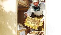 Работа в павильонах - очередной технологический осмотр пчелиных семей. На фото Игошин Олег Юрьевич. Фото 3