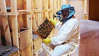 Работа в павильонах - очередной технологический осмотр пчелиных семей. На фото Игошин Олег Юрьевич. Фото 2