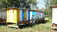 Технология павильонного содержания пчел. Автор Игошин Олег Юрьевич. Фото 3