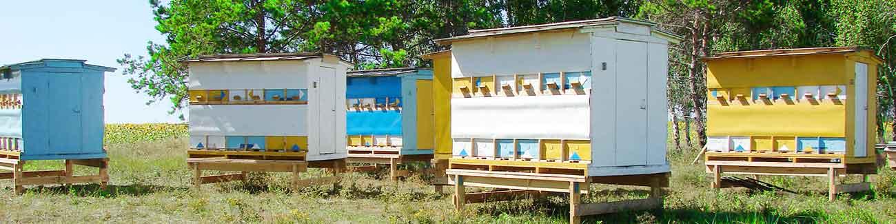 Купить мед в Самаре